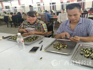 """平果县:在全广西打造残疾人精准康复""""平果模式"""""""