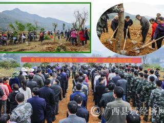 """东兰县掀起""""大种树""""义务植树热潮"""