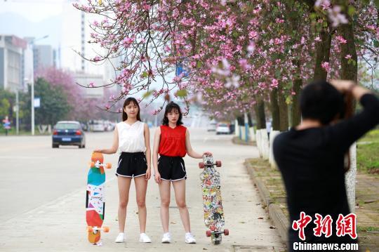 """""""粉色""""的风景,吸引了不少拍照留念的人。 朱柳融 摄"""