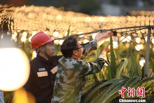 """42万盏""""花灯""""点亮广西千亩火龙果基地 助农户增收"""