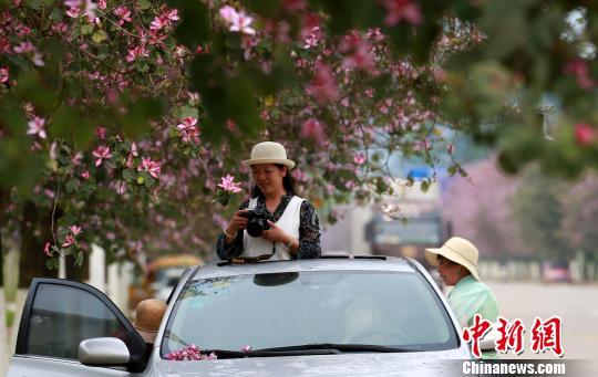 一名女子拿着相机在车里拍照。 朱柳融 摄
