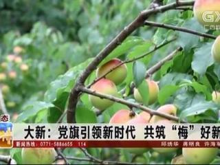 """大新县:党旗引领新时代 共筑""""梅""""好新生活"""