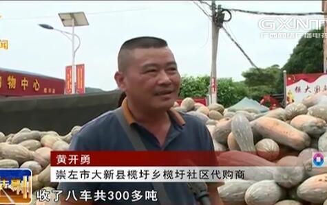 大新县:蜜本南瓜带出新产业助农增收致富