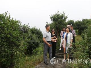 平果县:政协考察灌阳县油茶产业助推脱贫模式