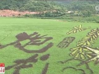 宾阳古辣:稻田艺术进入观景最佳期