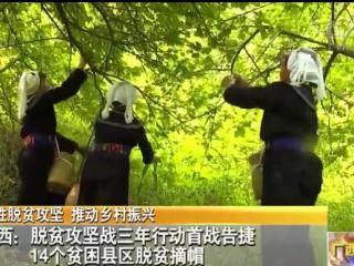 广西:脱贫攻坚战三年行动首战告捷 14个贫困县区脱贫摘帽