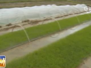 灵川县:巧用生态立体项目 强发展致富后劲