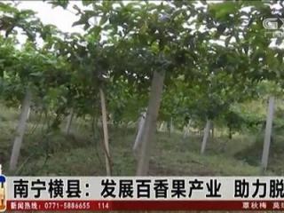 横县:发展百香果产业 助力脱贫攻坚