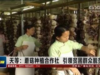 天等县:蘑菇种植合作社 引领贫困群众脱贫致富