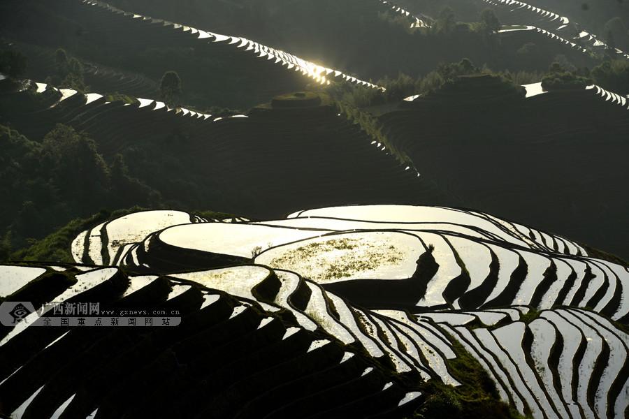 高清:龙胜梯田迎来最佳观光季 波光潋滟美如幻境