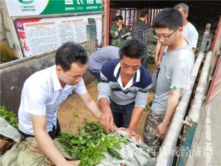 金秀县:巩固基层战斗堡垒  加快特色产业发展
