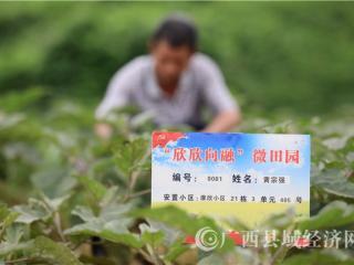 融安县:扶贫微产业暖了搬迁群众的心