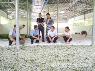 平果县龙江村:昔日深度贫困资源乏 今日产业脱贫有良方