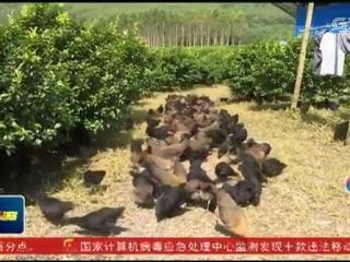 鹿寨县:成立合作社 脱贫群众成致富带头人