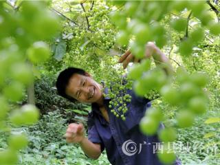 融安县龙革雄:人勤地生金  幸福脱贫村