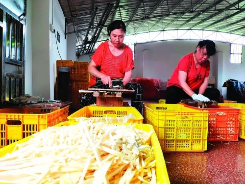 永福县:龙溪麻竹特色农业核心示范区带动村民走上脱贫致富路