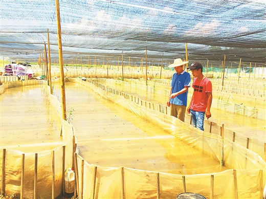 桂平市:石龙镇探索产业扶贫新机制见闻