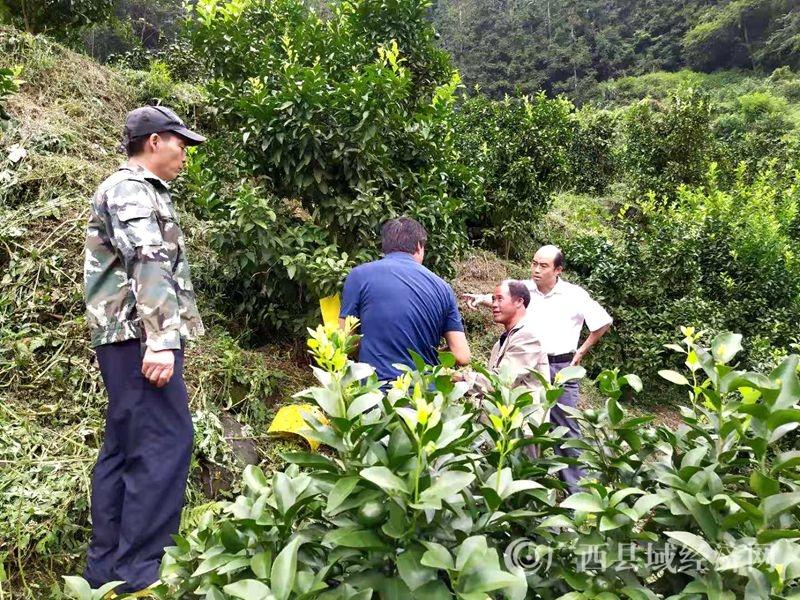 乐业县同乐镇:培训课开到贫困户果园 农技师现场指导果树管护