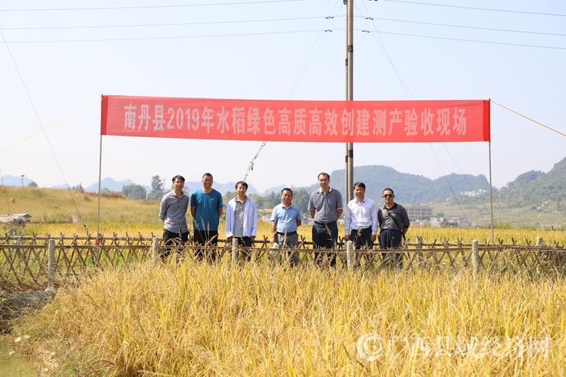 """南丹县:开展""""水稻绿色高质高效创建""""项目有成效"""