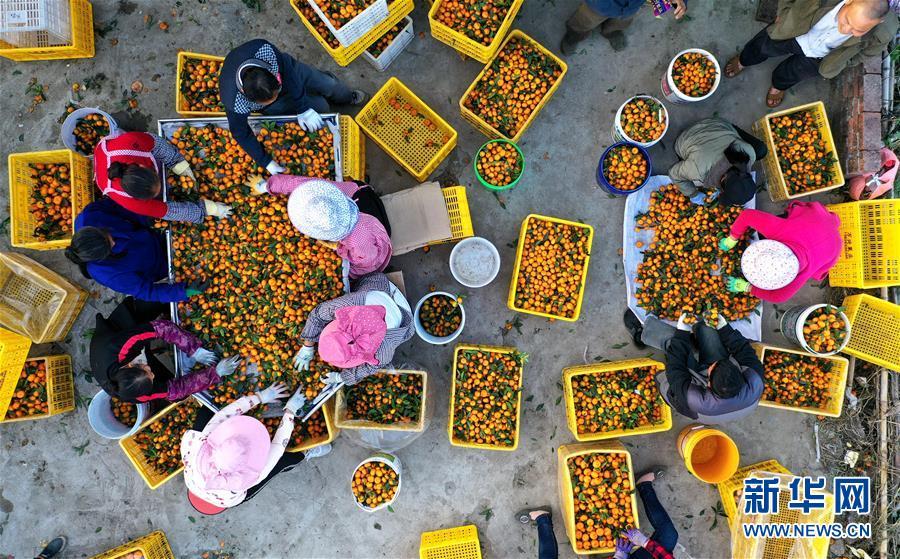 鹿寨县:做大做强产业 提高脱贫质量