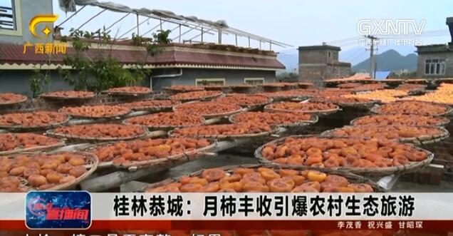 恭城县:月柿丰收引爆农村生态旅游