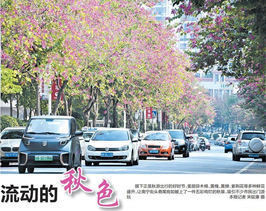 """南宁街头鲜花盛开成为市民赏秋""""网红""""打卡地"""