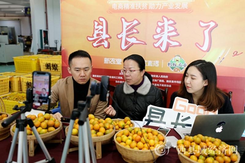 """融安县:成功举办2019・第十届""""融安金桔""""文化旅游节"""