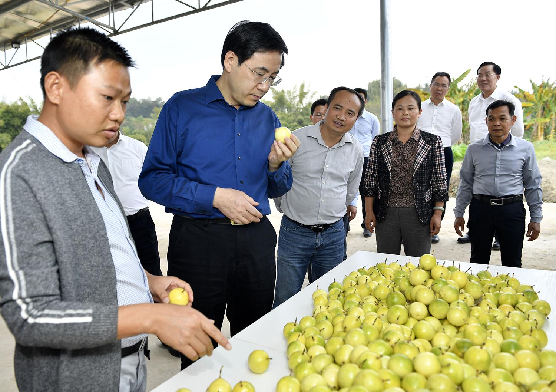 玉林市委书记黄海昆在容县调研时强调