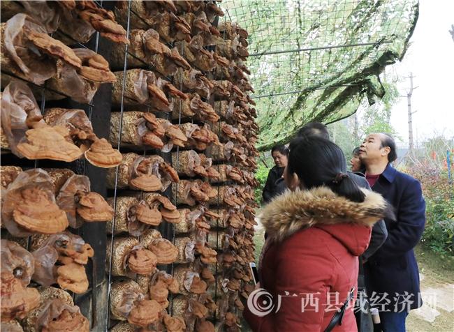 融安县:国家4A旅游景区灵芝透明工厂正式开园