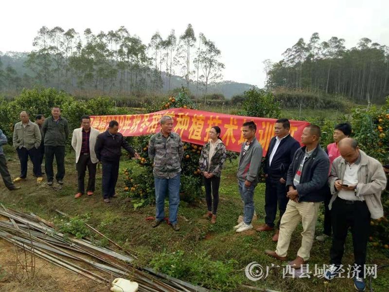 平果县四塘镇:人大代表提升种植能力 促进增收致富