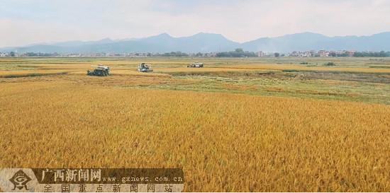 """贵港:富硒优质米 致富新""""硒""""望 迎来黄金发展期"""