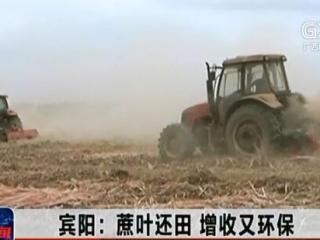 宾阳县:蔗叶还田 增收又环保