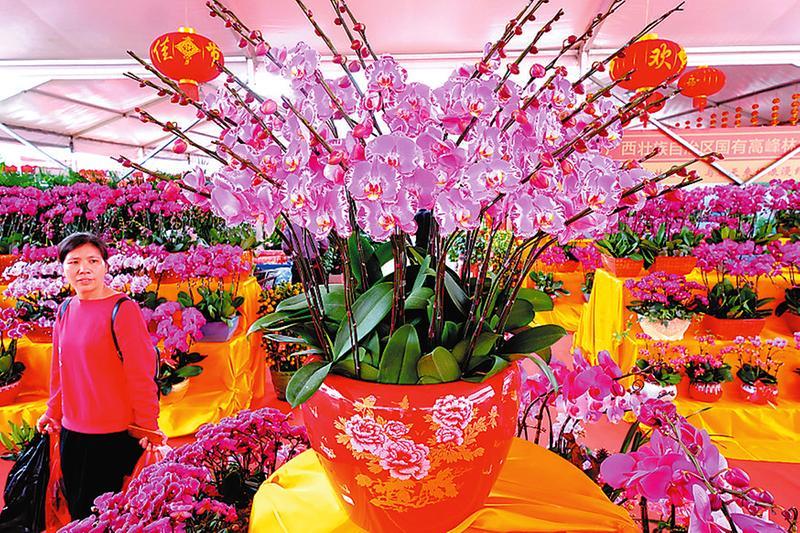 广西迎春花市启幕 1000多种花卉任你买