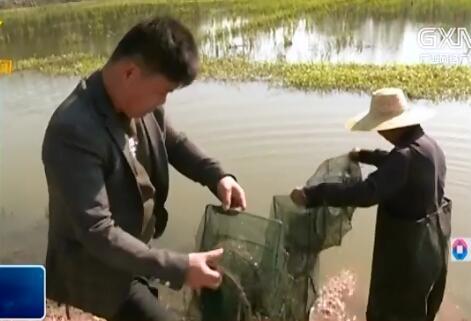 鹿寨县:发展稻虾共作 助力脱贫攻坚
