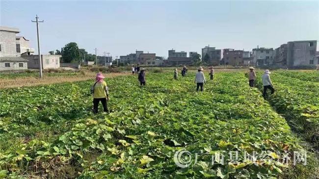 富川县:电商扶贫无淡季