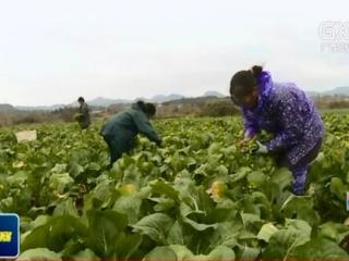 富川县:以合作社带动为载体 助力贫困户增收脱贫