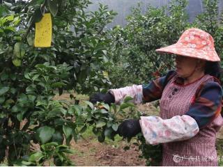 平果县同老乡掀起春耕生产热潮