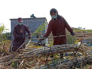 环江县:全力保障农业产业恢复生产