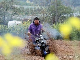 广西融安:立春到 农事忙