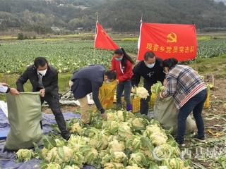 """恭城观音乡:疫情防控、脱贫攻坚""""两不误"""""""