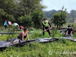 融安县:劳务队复产助脱贫