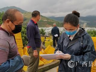 蒙山县:后盾帮扶单位干部驰援乡镇砂糖橘安全生产防控工作