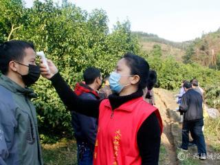 环江大安乡:疫情防控与农业生产两手抓两不误