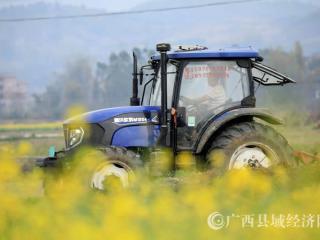 融安县:春耕忙种蔗