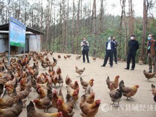河池市农业农村局专家组到南丹县吾隘镇检查指导春耕生产