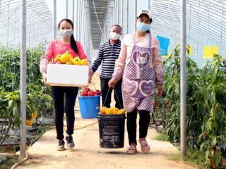 平桂区:抓好产业发展  巩固脱贫成效