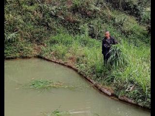 金秀罗香乡:以产业发展为动力 促进群众脱贫致富
