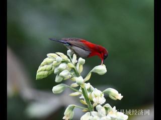 组图:观鸟咏春