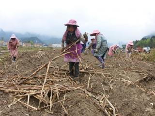 南丹县:抢抓农时 种植甘蔗不误春