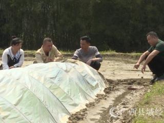 """融安县:订单种植   致富有""""稻"""""""